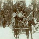 Historical photo showing horses pulling a sled piled high with huge logs in the winter time with workers in the background